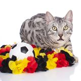 Bengal-Katze mit Fußball Stockbild
