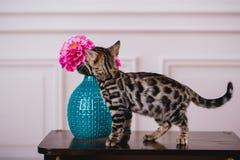 Bengal-Katzen babys Leopard Lizenzfreie Stockfotos