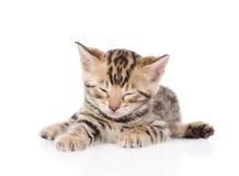 Bengal kitten sleeping. isolated on white background Stock Image