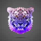 Bengal tiger poly Side light purple. Bengal tiger low poly portrait. Gradient purple. Side light source. Abstract polygonal illustration Stock Photography