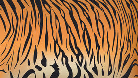 Bengal Tiger Stripe Pattern Stock Photography