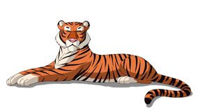 Bengal Tiger  on White Background Stock Photos