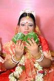 Bengalska panna młoda Zdjęcia Royalty Free