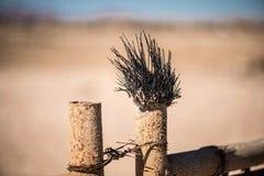 Bengel des Toten Meers auf einem Metallzaun in der Wüste Bewirken Sie seitlichen 50mm Nikkor Lizenzfreie Stockfotos
