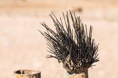 Bengel des Toten Meers auf einem Metallzaun in der Wüste Bewirken Sie seitlichen 50mm Nikkor Lizenzfreies Stockbild