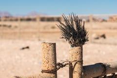 Bengel des Toten Meers auf einem Metallzaun in der Wüste Bewirken Sie seitlichen 50mm Nikkor Lizenzfreies Stockfoto