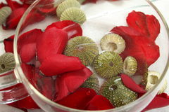 Bengel mit den rosafarbenen Blumenblättern Lizenzfreie Stockbilder
