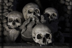 Bengravvalv med 40.000 ben inom arkivfoton