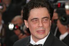 Benicio Del Toro Royalty Free Stock Photo