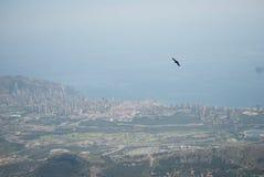 Benidorm сверху с птицей Стоковое Изображение