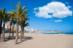 Benidorm Alicante strandpalmträd och medelhavs- Arkivfoton
