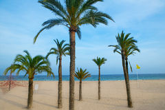 Benidorm palm trees beach in mediterranean alicante Royalty Free Stock Image