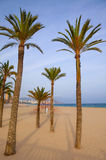 Benidorm palm trees beach in mediterranean alicante Stock Photo