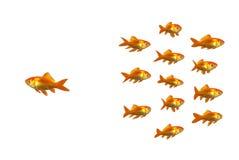 Benieuwd zijnde goudvis Royalty-vrije Stock Afbeelding
