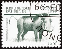 BENIN - CIRCA 1999: A stamp printed in Benin from the `Mammals` issue shows Desert Warthog Phacochoerus aethiopicus, circa 1999.