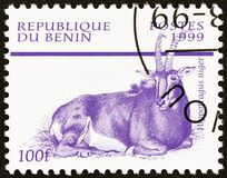 BENIN - CIRCA 1999: A stamp printed in Benin from the `Mammals` issue shows Sable Antelope Hippotragus niger, circa 1999.