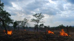 Benishangul Gumuz, Etiopien: Skogsbränder royaltyfria foton