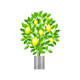 Benjamin ficus. Deciduous plant in flowerpot. House plant realistic icon for interior decoration . Coniferous plant in Stock Image