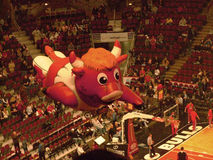 Benny the Bull Flying United Center. An inflatable balloon of Benny the Bull, commonly known as Benny, the official  mascot of the Chicago Bulls of the National Stock Photos