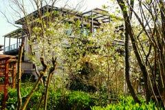 Bens imobiliários de Chongqing imagens de stock royalty free