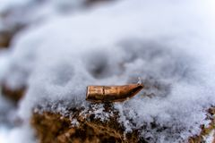 Bent Bullet After Being Shot sur le fond de sable de Milou - avec les marques ballistiques images stock