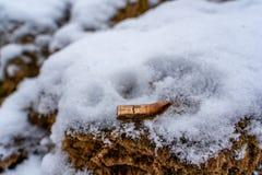 Bent Bullet After Being Shot sur le fond de sable de Milou - avec les marques ballistiques photo libre de droits