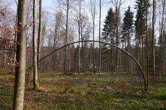 Bent, Curved Tree Royalty Free Stock Photos