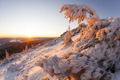 Bent by ice. Bent tree full of snow and ice at red sunset in romanian mountains Stock Photography