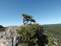 A bent, lonely tree on a rock. Bent, lonely tree on a rock in the Parc de Loisirs Nature de Montpellier-le-Vieux, Aveyron, France Royalty Free Stock Photography