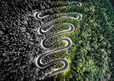 Bent road in the forest Royalty Free Stock Images