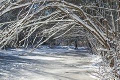 Bent Snow a couvert des arbres Images libres de droits
