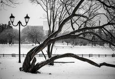 Bent Tree Stockfoto
