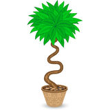 Bent Tree. In Flowerpot  on White Stock Photography