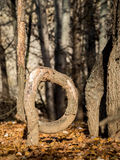 Bent tree in the forest in autumn. Bent tree in the park in autumn Royalty Free Stock Photo