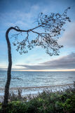 Bent tree near the see. Bent pine tree near the sea in winter Royalty Free Stock Photos