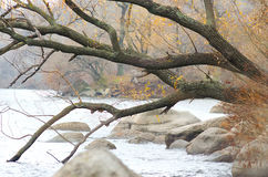 Bent tree on the river bank. Autumn landscape on the lake Royalty Free Stock Photography