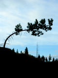 Bent tree silhouette Stock Images