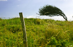 The bent tree. Small bent tree on the hill. The shy is cloundy but sunny Royalty Free Stock Image