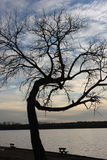 Bent tree. Taken at Weatherford Lake, East of Weatherford. 19 miles from downtown Fort Worth. Surface area is approx 1,158 acres, Maximum depth is 39 feet Stock Photography