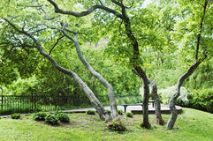 bent trees in park Royalty Free Stock Photography