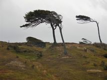 Bent trees. The patagonia`s wind is so strong that bents multiple trees of the area stock photos