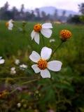 Bent u op de hoogte van deze bloemennaam? royalty-vrije stock fotografie
