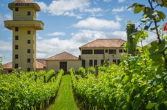 Bento Golçalves , Brasil, October 08 - 2017: Luxury Winery, Vin. Eyard of grapes in the Vale dos Vinhedos in Bento Gonçalves, a gaucho wine Royalty Free Stock Image