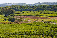 Bento Goncalves Vineyards Royalty Free Stock Images