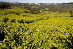 Bento Goncalves Vineyards Stock Photography