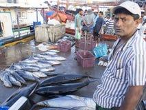 Bentota fiskmarknad, Sri Lanka Fotografering för Bildbyråer