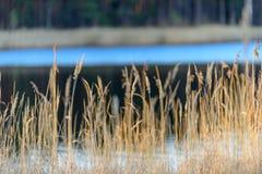 bents στο ηλιοβασίλεμα από τη λίμνη Στοκ εικόνες με δικαίωμα ελεύθερης χρήσης