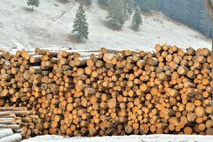Benutting van bossen royalty-vrije stock foto's