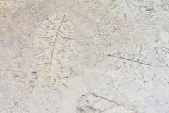 Benutzen Sie die Blätter herunterdrücken auf dem Zementboden, der nicht getrocknet worden war, um schöne Designe zu schaffen Lizenzfreies Stockfoto