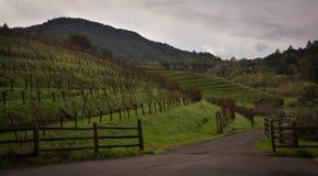 Benziger Family Winery near Glen Ellen CA Stock Photos